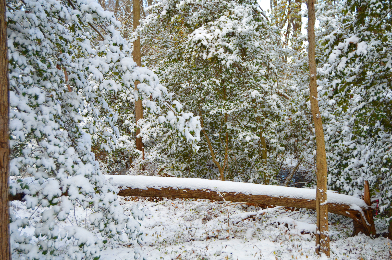 Landscaping Millersville Snow