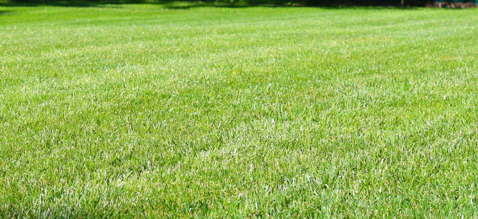 Lawn Mowers Parole Maryland